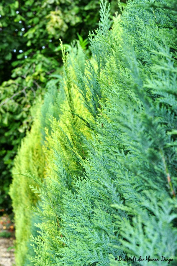 Herbstspaziergang - vielfältig grüne Hecke