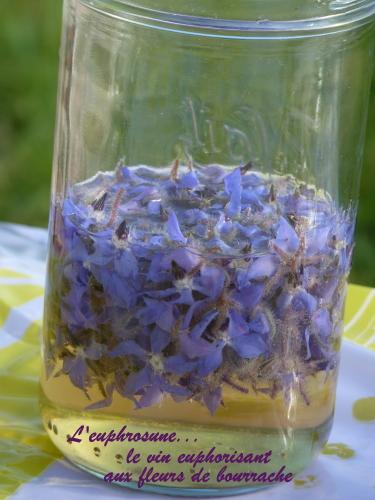 vin aux fleurs de bourrache