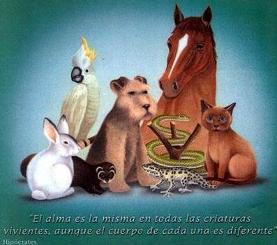 Dibujo por la Semana de la Vida Animal