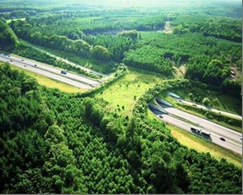 Amazing Nature Picture on Amazing Posts  Nature Bridge   Netherlands