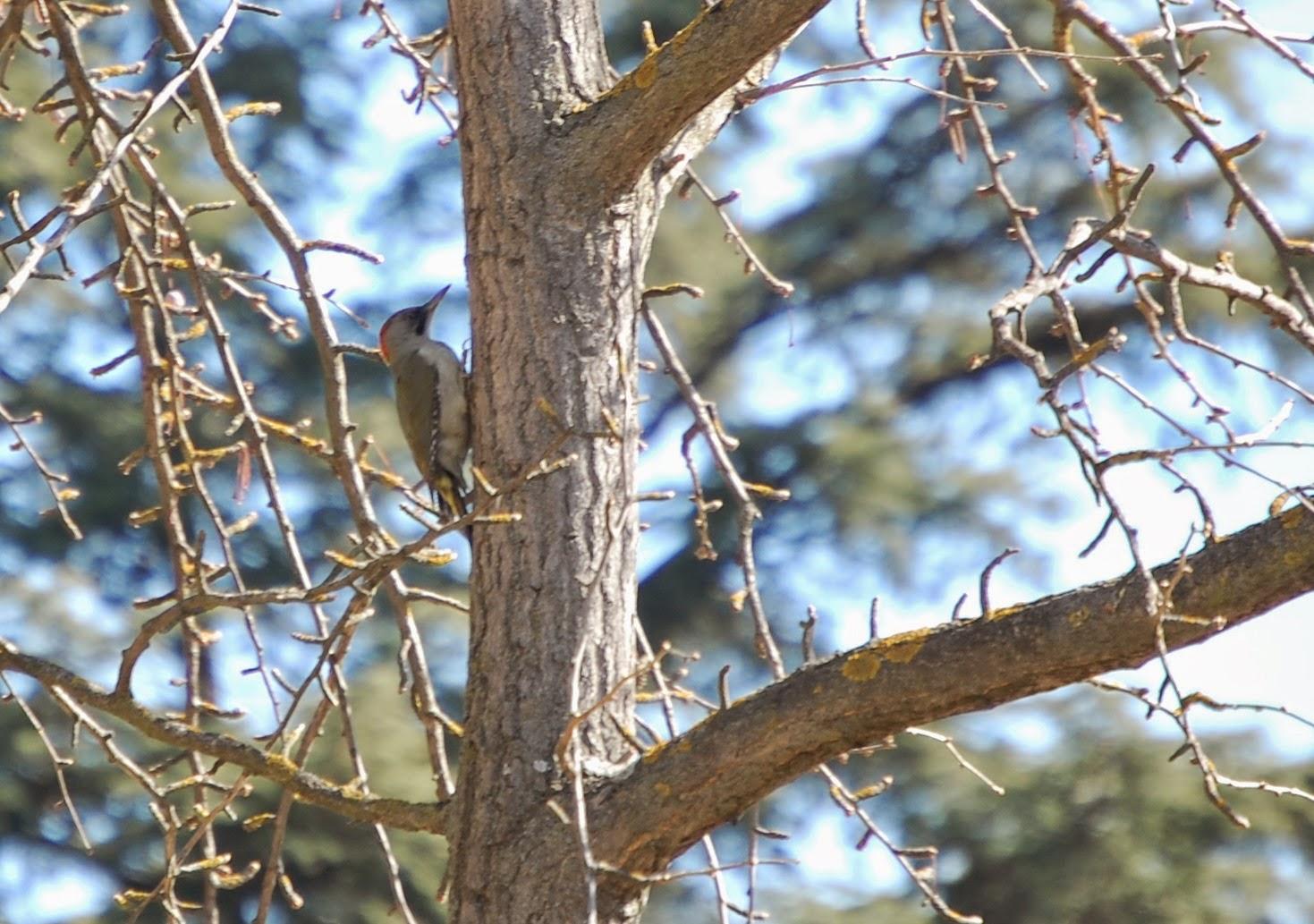 Blog Go Tandem - Itinerario Ornitológico Parque Oeste - Pito Real