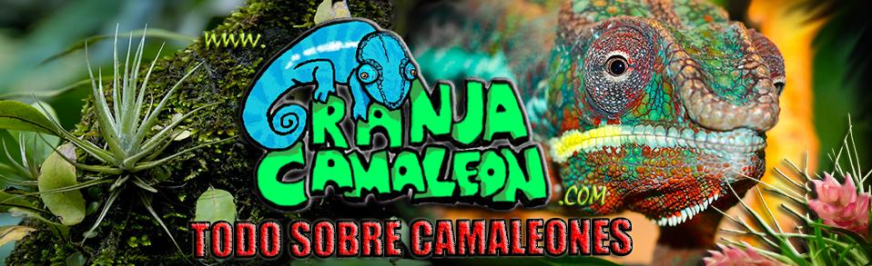 GranjaCamaleon - Todo sobre camaleones