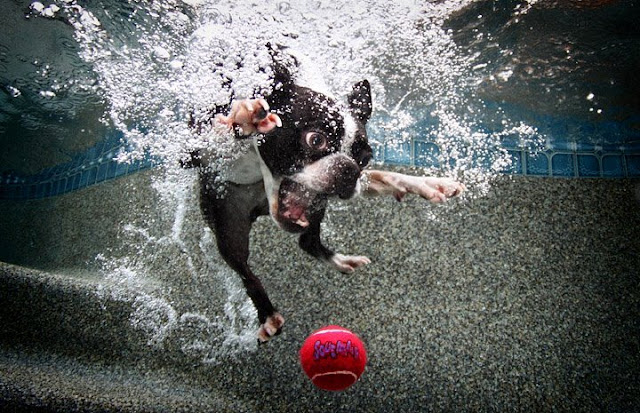 stunning underwater photography with dogs