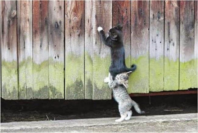 animales trabajando en equipo