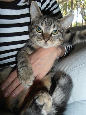 Paçoquinha - gatinha para adoção P7200112