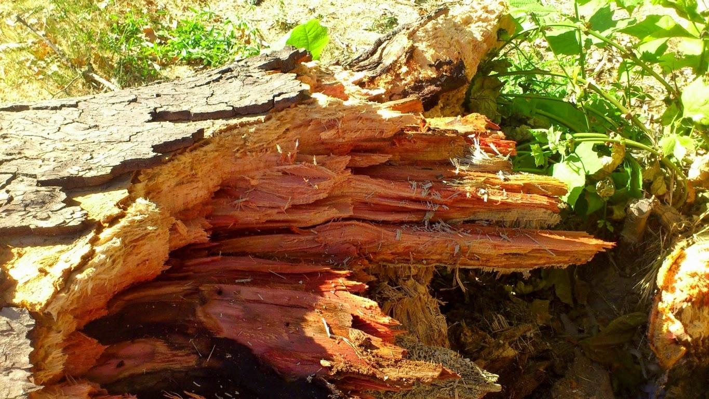 Causas-de-la-caída-de-ramas-y-árboles-en-Madrid