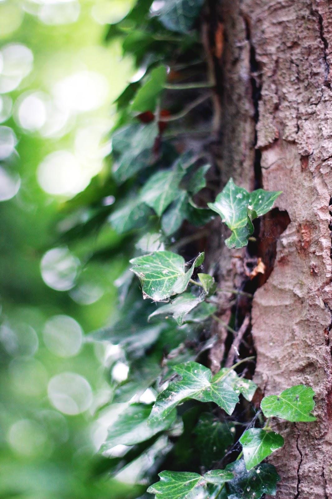 Markeaton Park Derby Tree
