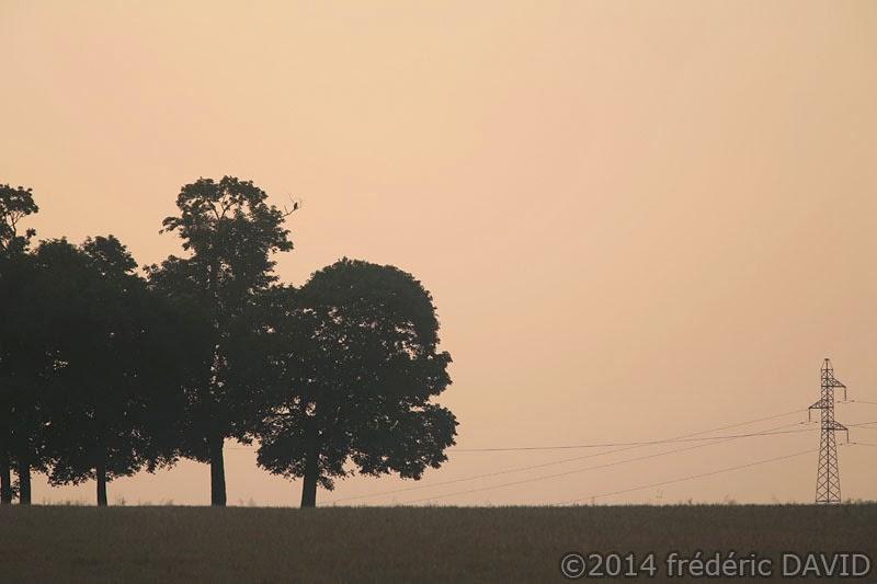 campagne arbres silhouettes matin aube pylône Seine-et-Marne