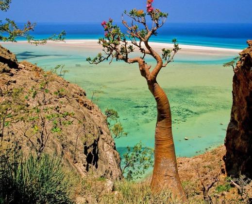 Misteri Pulau Socotra di Yemen - Lokasi Dajjal Dirantai?