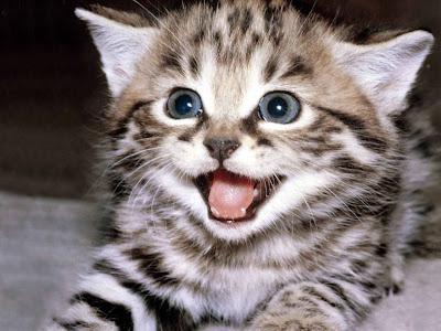 funny cat-16