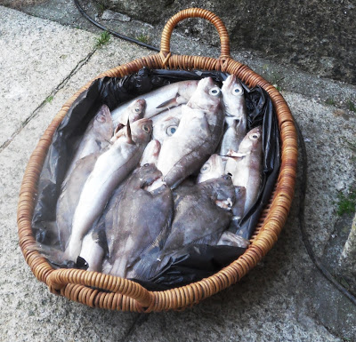 Basket of fish
