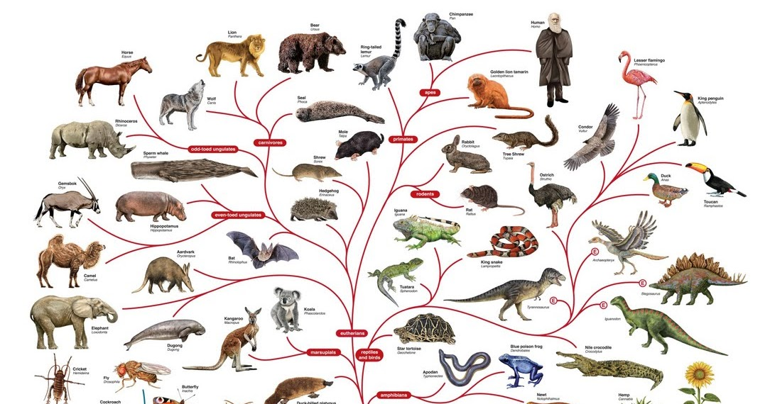 Charles Darwin and the Tree of Life Essay Sample