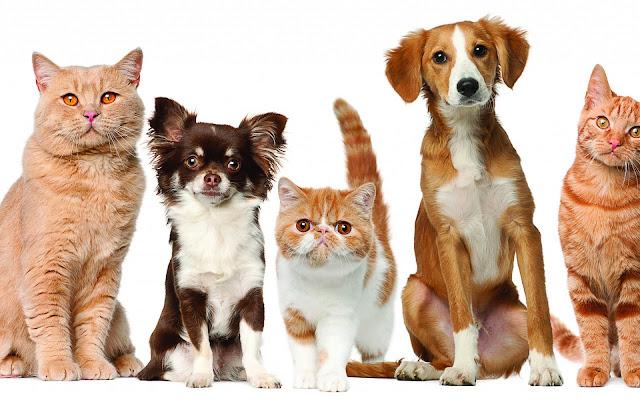 foto honden katten wallpaper