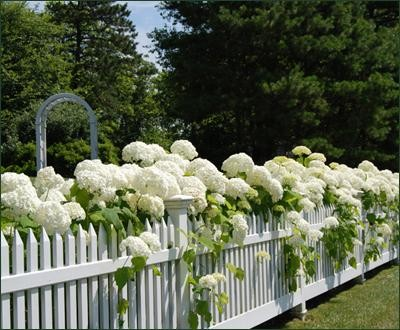white picket fence. White Picket Fences White Picket Fence