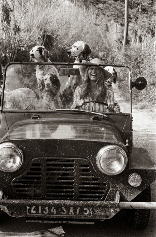 bardot and dogs