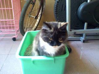 Cara Merawat Kucing Agar Terhindar Dari Toxoplasma