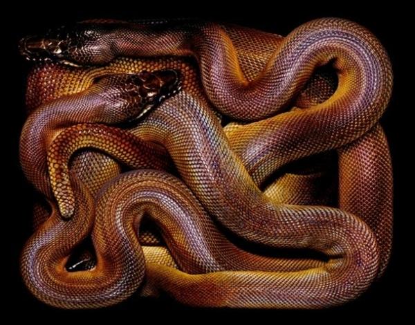 http://3.bp.blogspot.com/-6sAhXB5TjKY/TpbP7V8-4dI/AAAAAAAADBU/eEh60lATWKI/s1600/256714%252Cxcitefun-fascinating-snakes-14.jpg