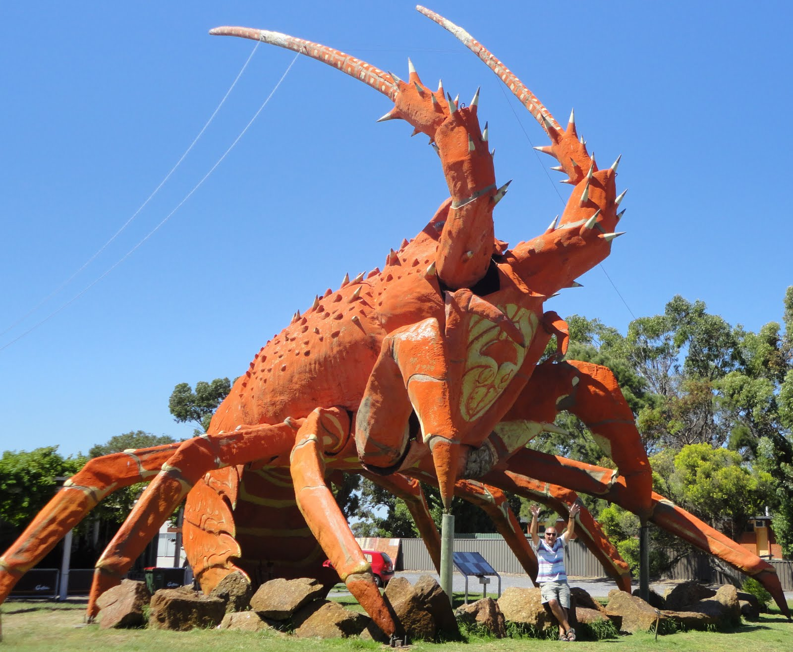 Giant Lobster | www.imgkid.com - The Image Kid Has It!