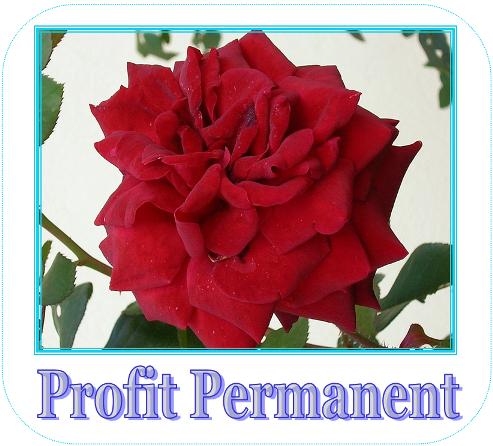Profit Permanent