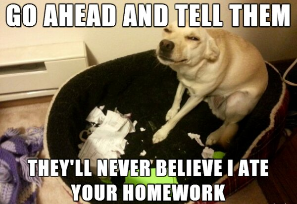 14 Hilarious Homework Excuses  Edutopia