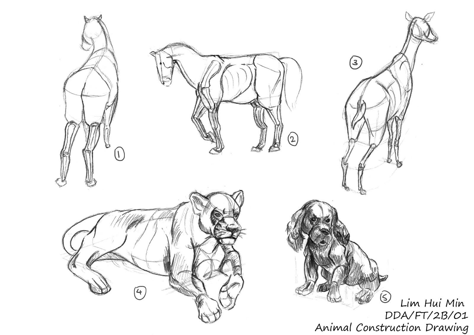 Lim Hui Min Portfolio: Animal Anatomy: Construction Drawing