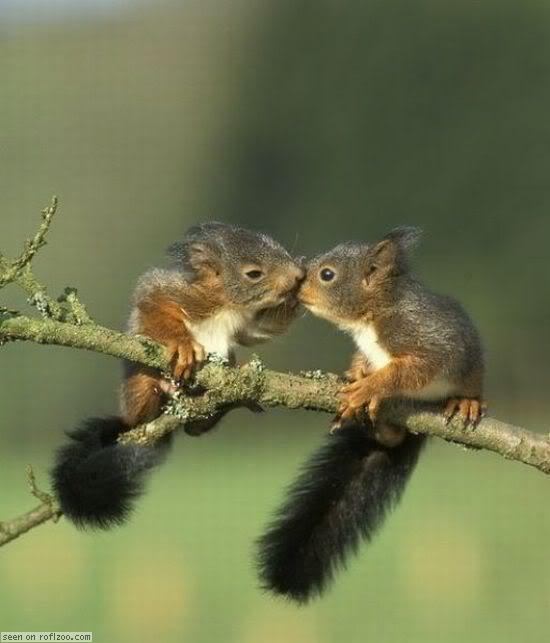 Cute squirrels in love - photo#19