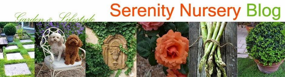 Serenity Nursery Blog