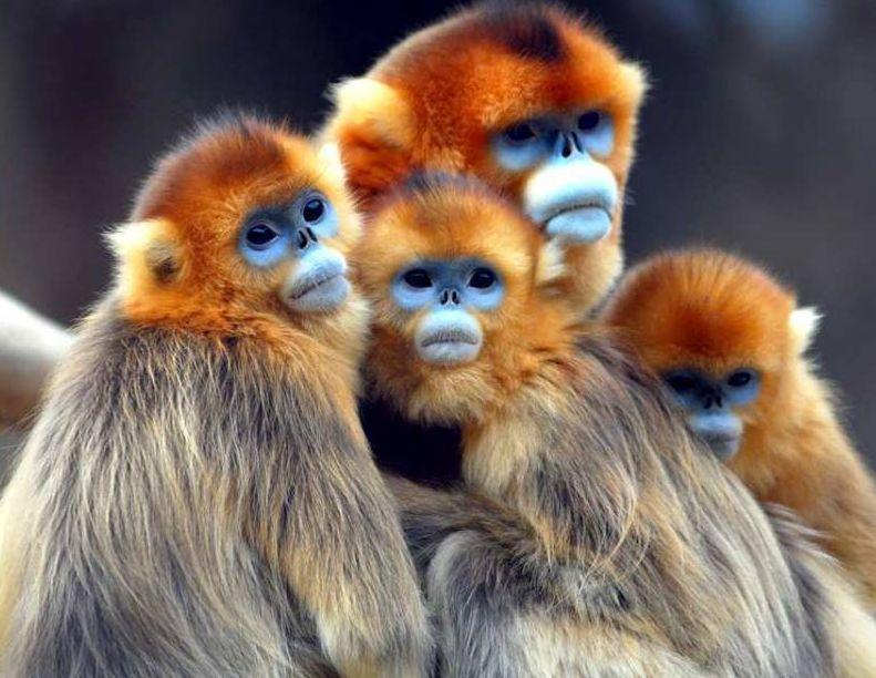 Małpki niebieskookie :)