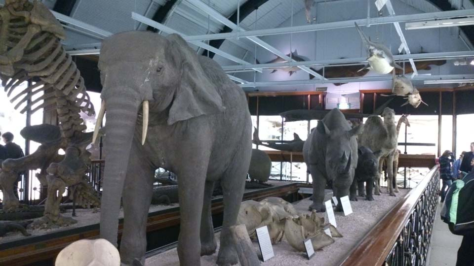 Natural History Museum In Tring