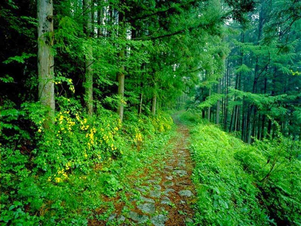 Biomas brasileiros campos sulinos floresta amaz nica for Ta 2s 0138