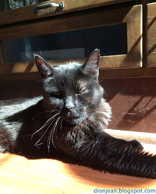 Troy the cat resting in the sunshine