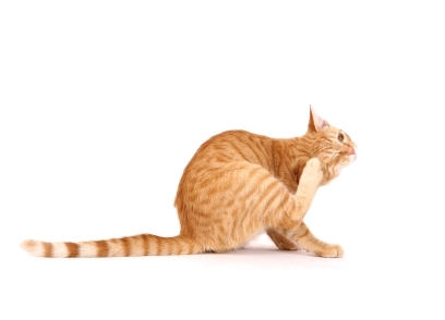 Treating Ear Mites In Cats With Mineral Oil