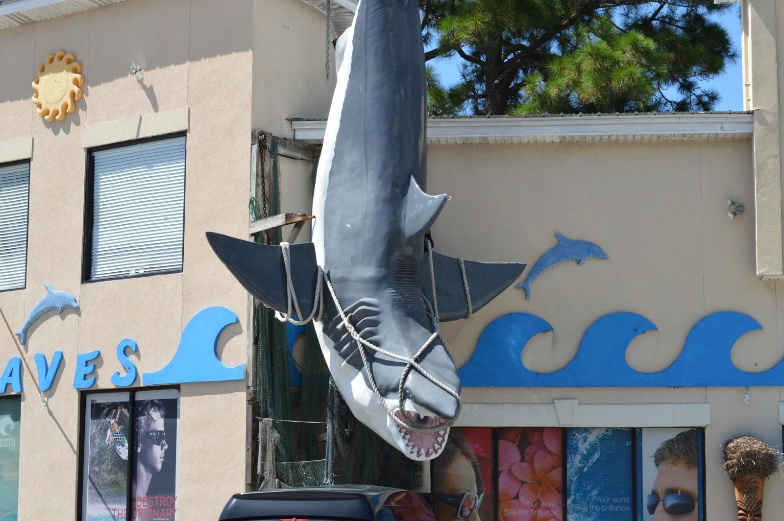 tybee island shark