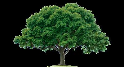 Arti Menggambar Pohon Saat Psikotest, makna tes psikotes gambar pohon...http://dammar-asihan.blogspot.com/