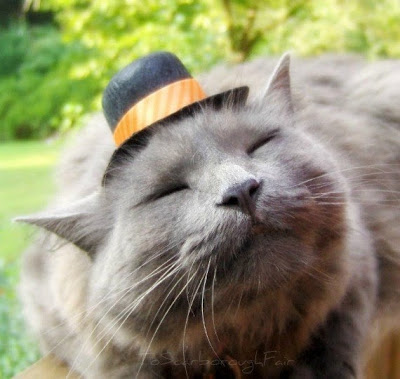 Top Hats for Cats