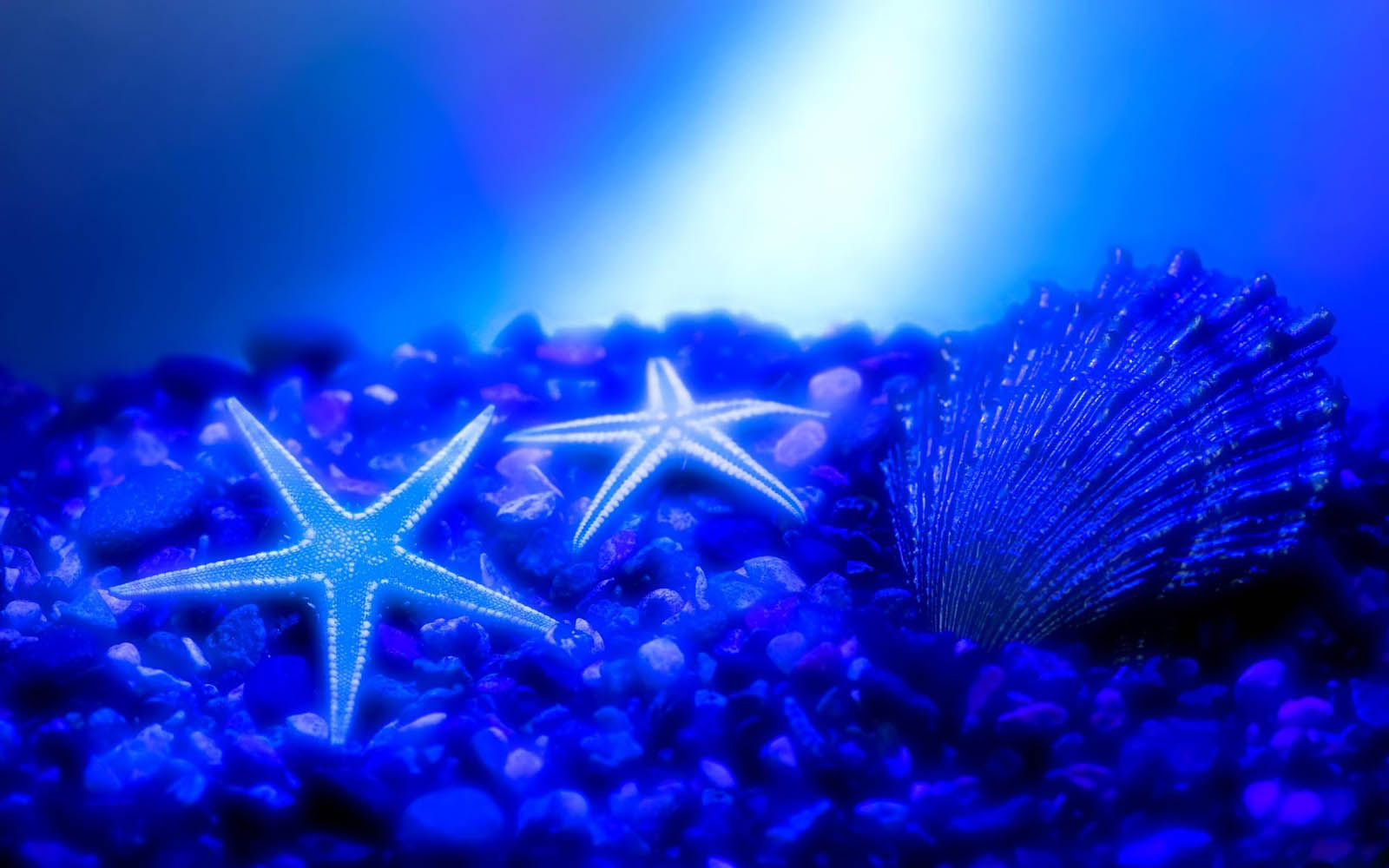 Wallpapers starfish wallpapers - Wallpaper ocean blue ...
