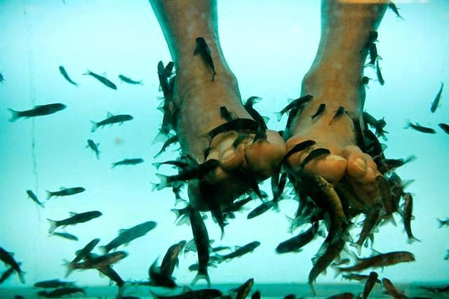 Joe 39 s aquaworld for exotic fishes mumbai india 9833898901 for Fish pedicures near me
