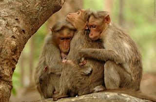 Funny Animals Hugging