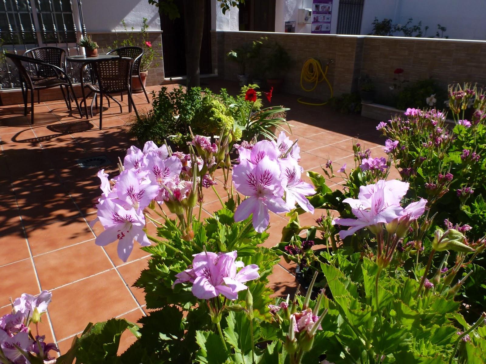 Olvera diary los balcones patios y jardines de olvera for Jardines de patio
