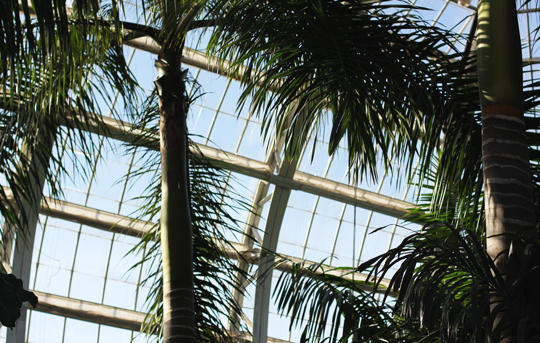 jungle room in conservatory at botanical gardens