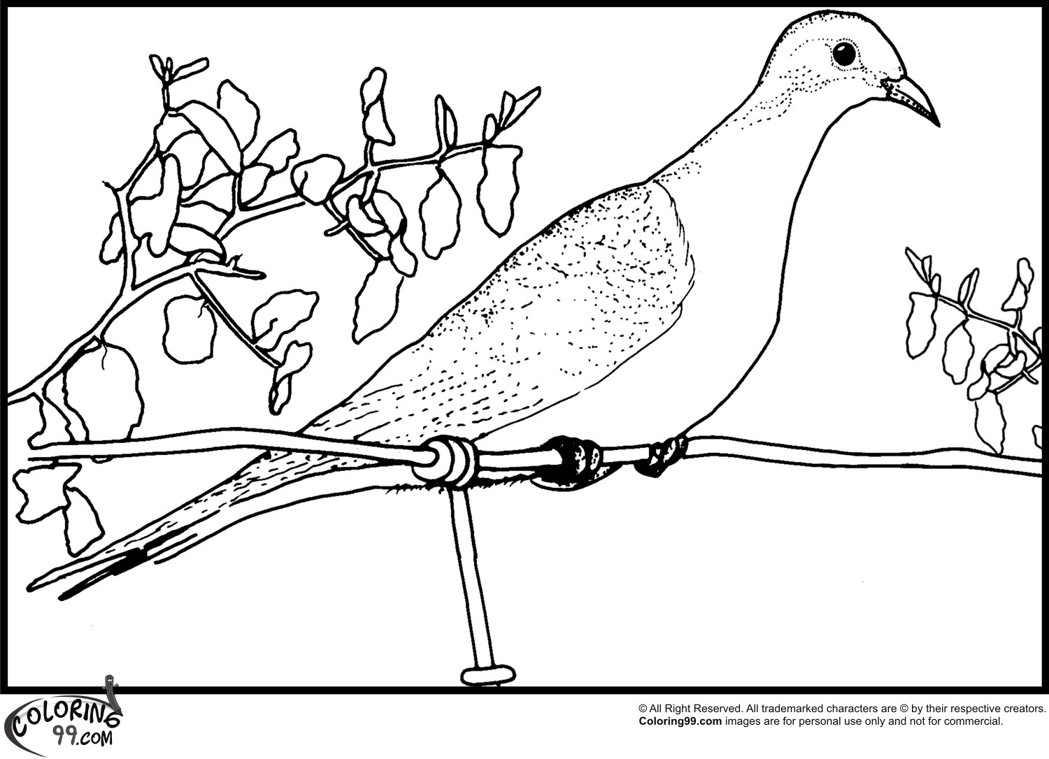 dove coloring pages team colors