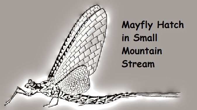 Mayfly hatch in small mountain stream