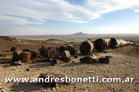 El Bosque Petrificado de Jaramillo - Puerto Deseado - Patagonia - Andrés Bonetti
