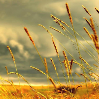 Nature-Wallpapers-for-iPad-Wallpapers
