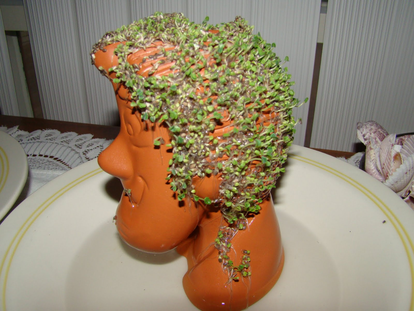 Chia pet herb garden - Add 1 4 Cup Of Water To 2 Teaspoons Of Chia Seeds Stir The Mixture After 15 Minutes To Moisten All Seeds Then Let It Set For 24 Hours