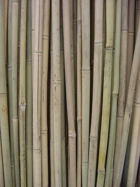Bamboo Logs1