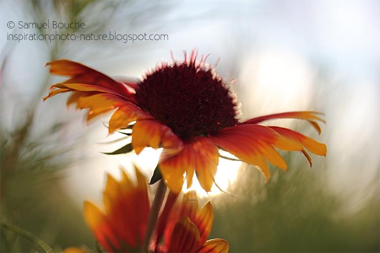 photo macro fleur nature