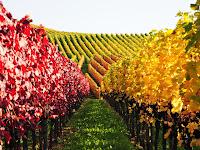 Autumn At The Vineyard2