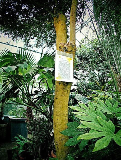 maslin gradina botanica iasi