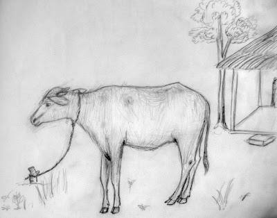 Sketch of a Young Buffalo at my home!
